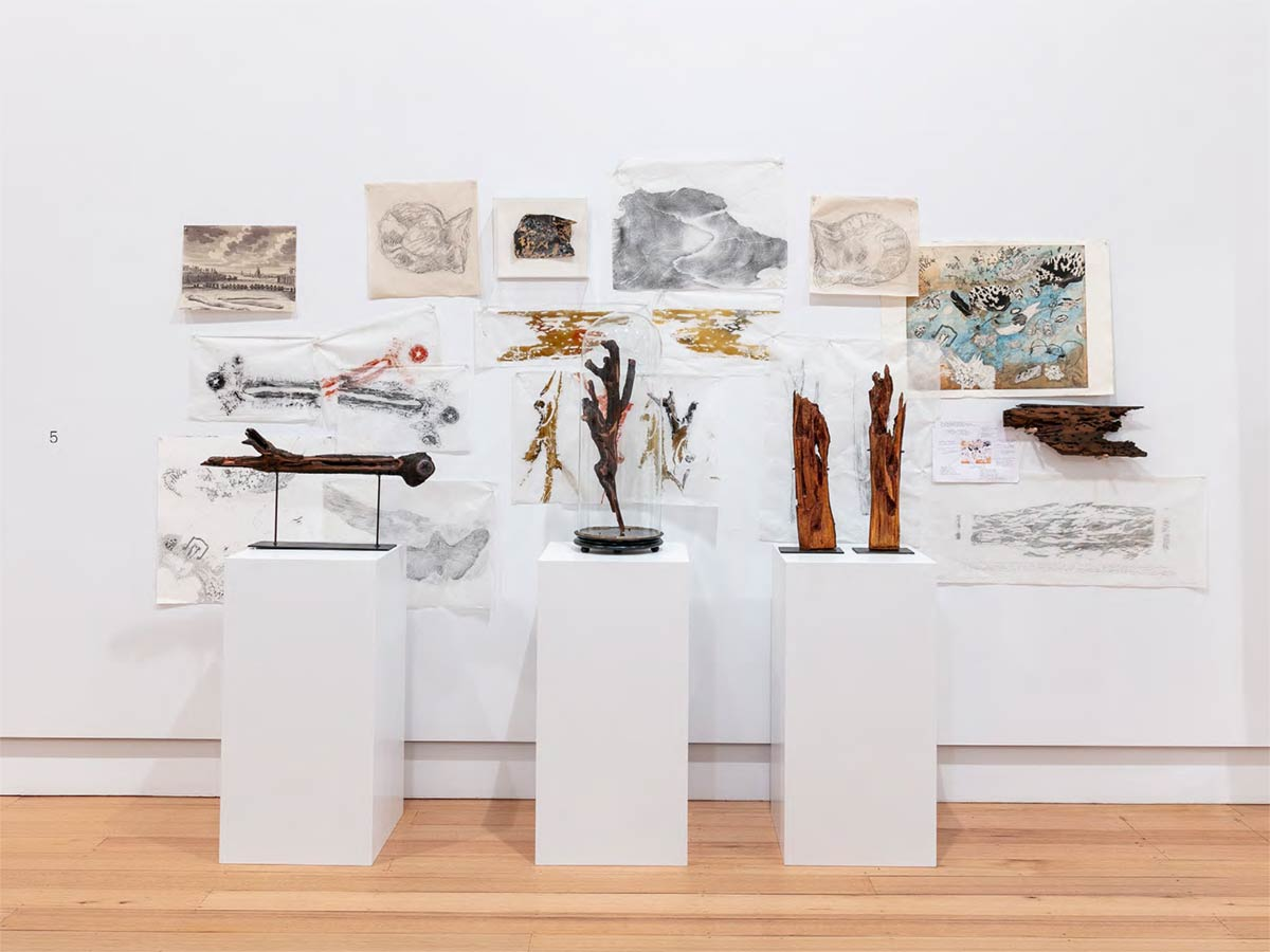 John Wolseley and Mulkun Wirrpanda–Molluscs / Maypal and the warming of the seas, installation view, Geelong Gallery. Photographer: Andrew Curtis. Courtesy of the artists and Geelong Gallery.